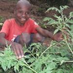 Josue next to his tomato plants