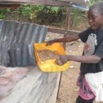 The orphaned boys enjoy feeding the pigs