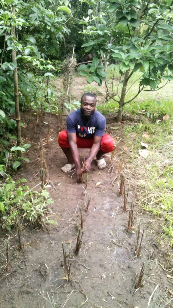 Jacques planting citronella in Kikimi.